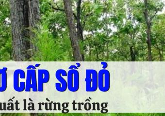 Điều kiện, hồ sơ cấp Sổ đỏ cho rừng sản xuất là rừng trồng