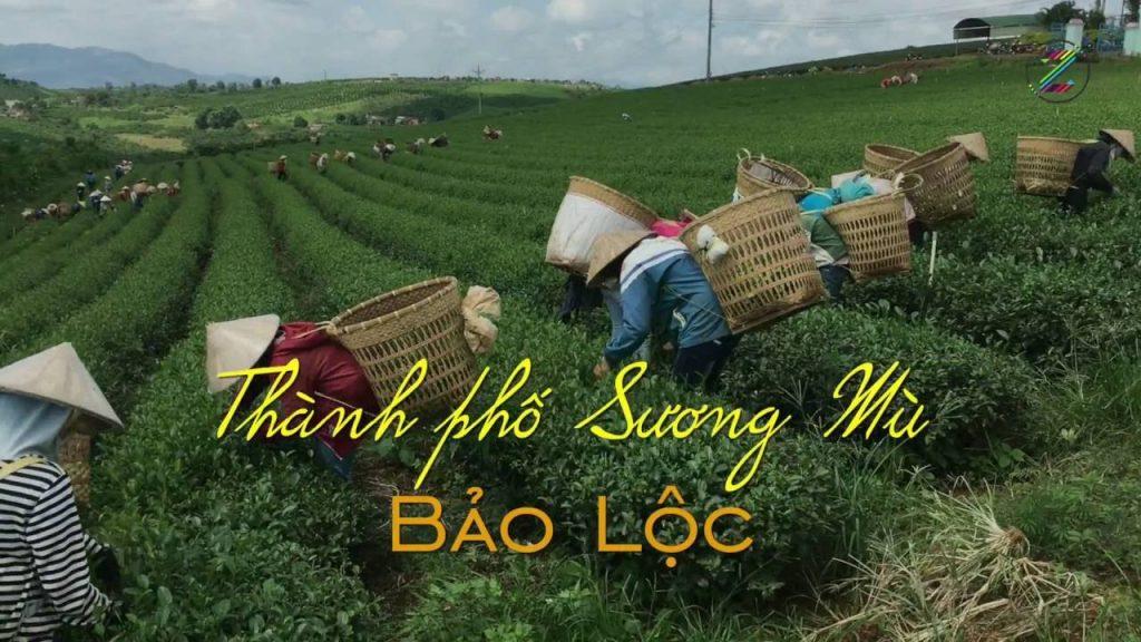 bao-loc-lam-dong